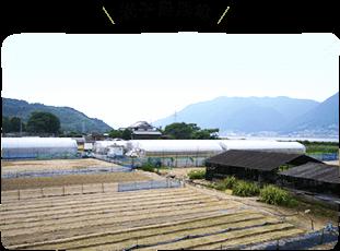 岩小島農場