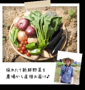 採れたての新鮮野菜を農場から直接お届け